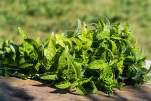 mint from ground on wood e1567361056924