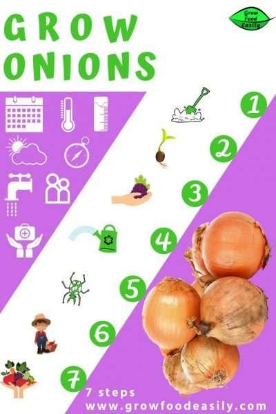 7 steps to grow onions