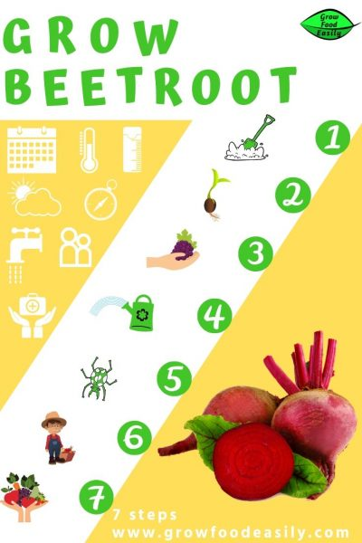 7 steps to growing beetroot