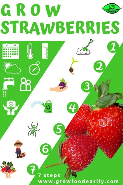 7 steps to growing strawberries