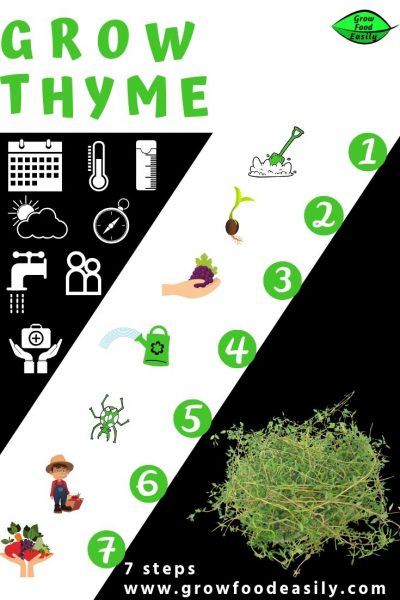 7 steps to growing thyme