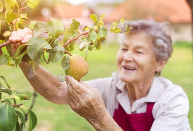 woman picking a pear e1567359306460