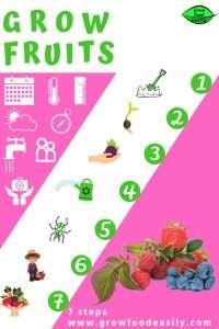 grow fruits 7 steps e1567366124765