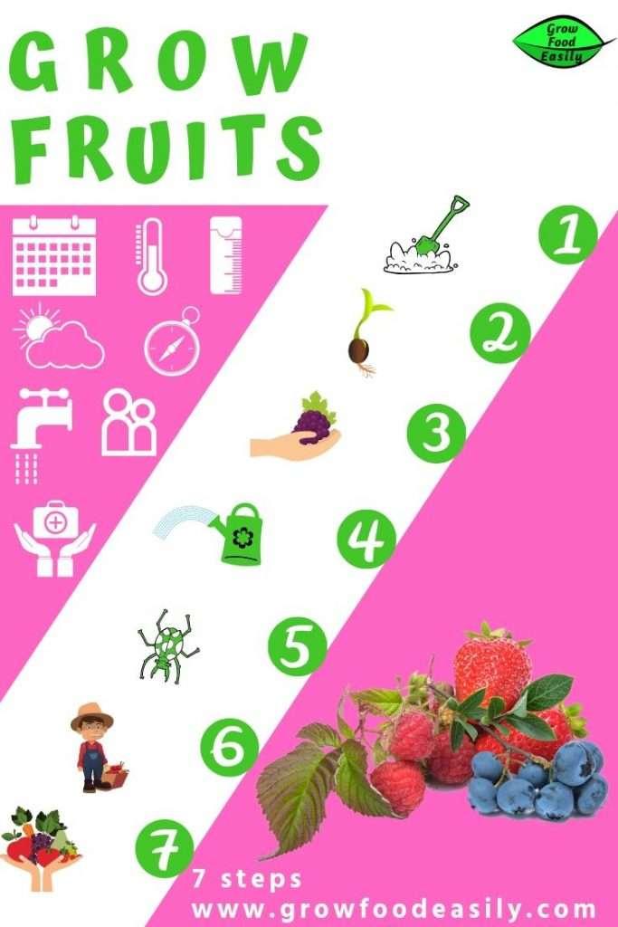 Grow fruits - 7 steps
