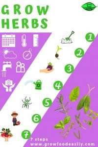 grow herbs 7 steps e1567366084591