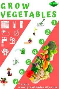 grow vegetables 7 steps e1567366068955