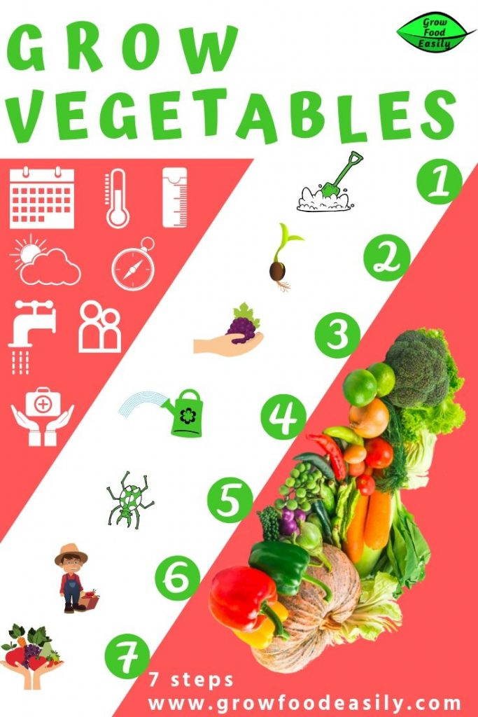 Grow vegetables - 7 steps