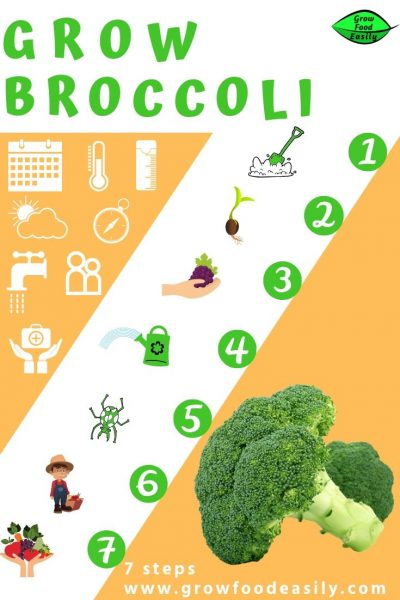 growing broccoli tips e1567365789895