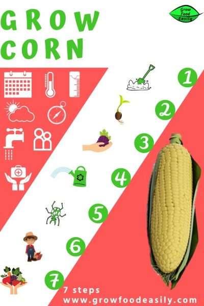 how to grow corn e1567358915168