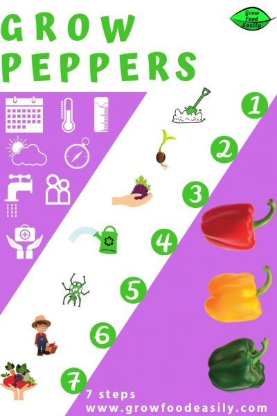 how to grow peppers e1567358449159