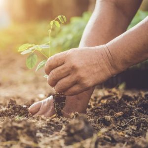 planting a pea tree e1567358714289