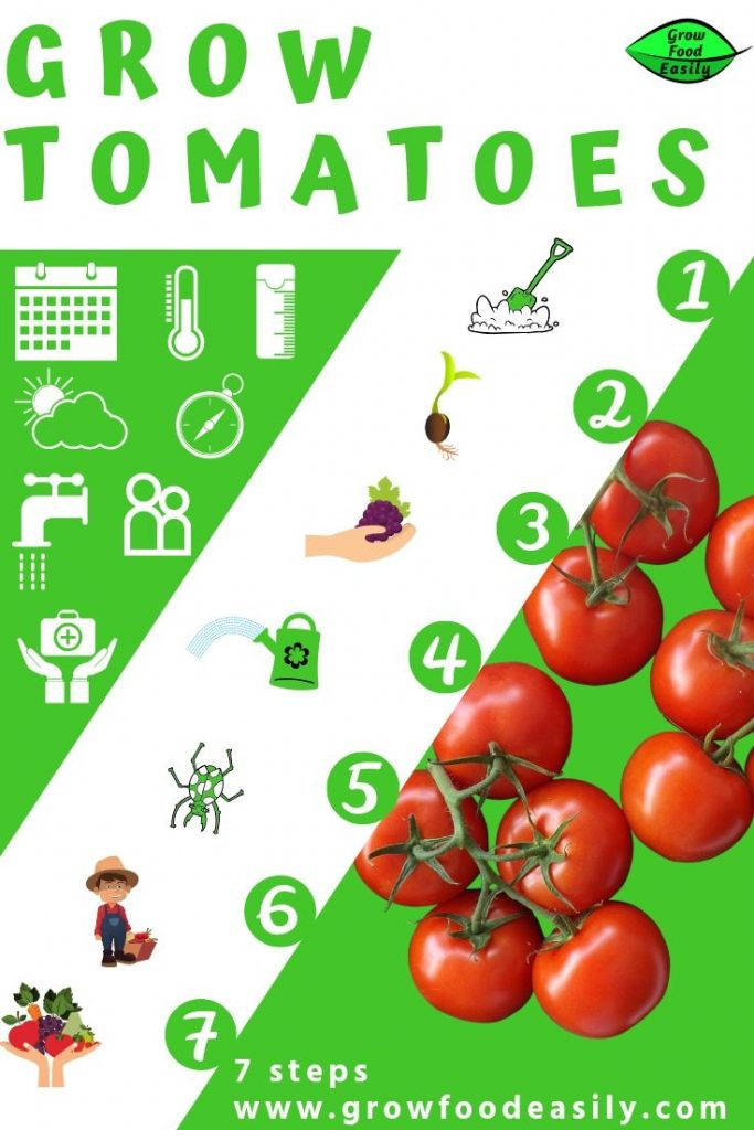 Seven steps to growing tomatoes