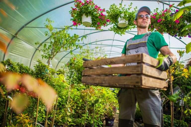 gardener in greenhouse polytunnel e1567283056787