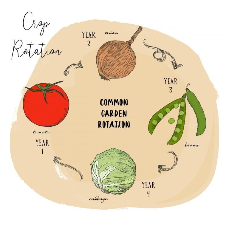crop rotation e1567283734833