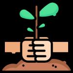 3 planting
