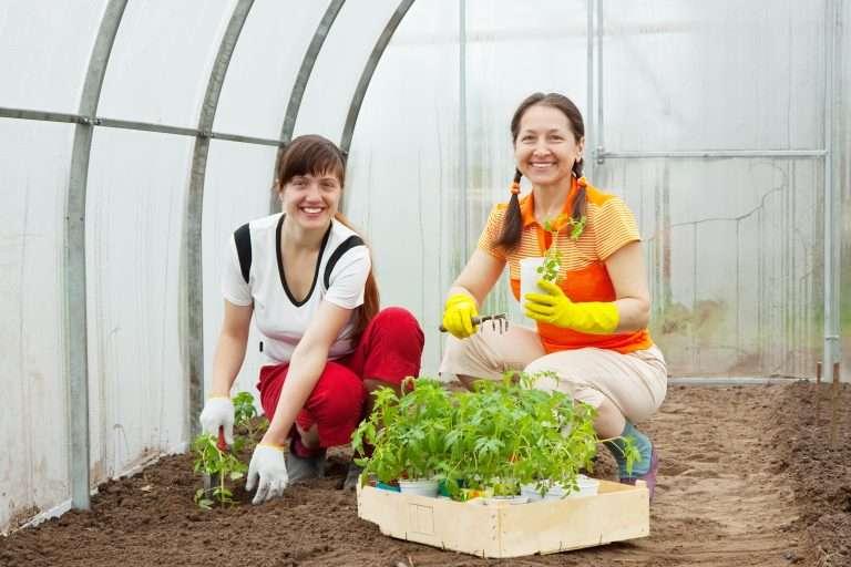 women planting tomato seedling e1567283255399