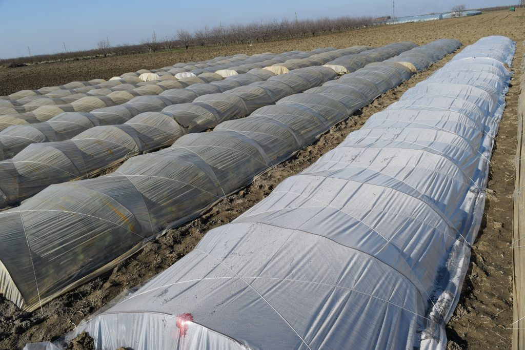 8 large and long polytunnels