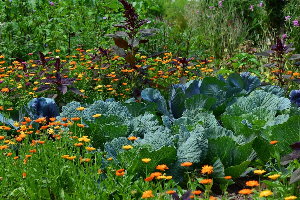 Companion Planting - Grouping Vegetables