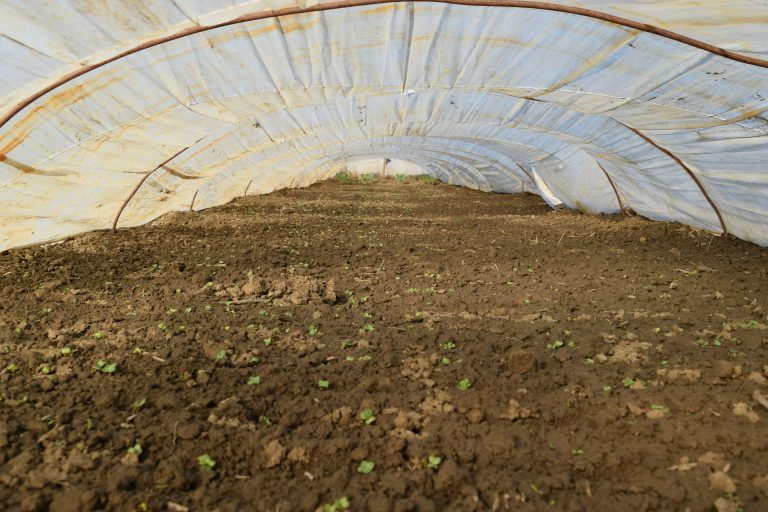 inside a long polytunnel e1567283142481