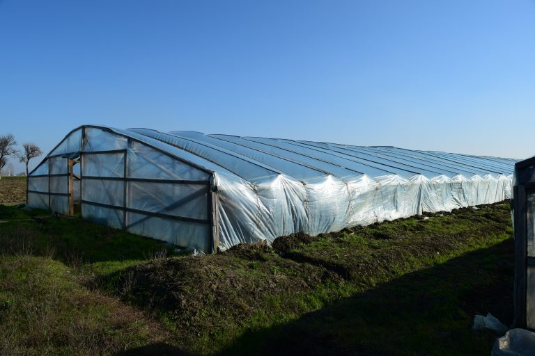 the greenhouse for growing vegetables in greenhouses e1567283341294