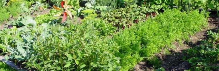 companion planting grouping e1567283846503