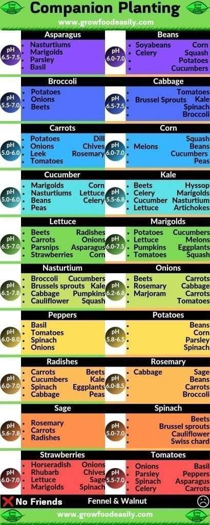 Companion Plants Chart