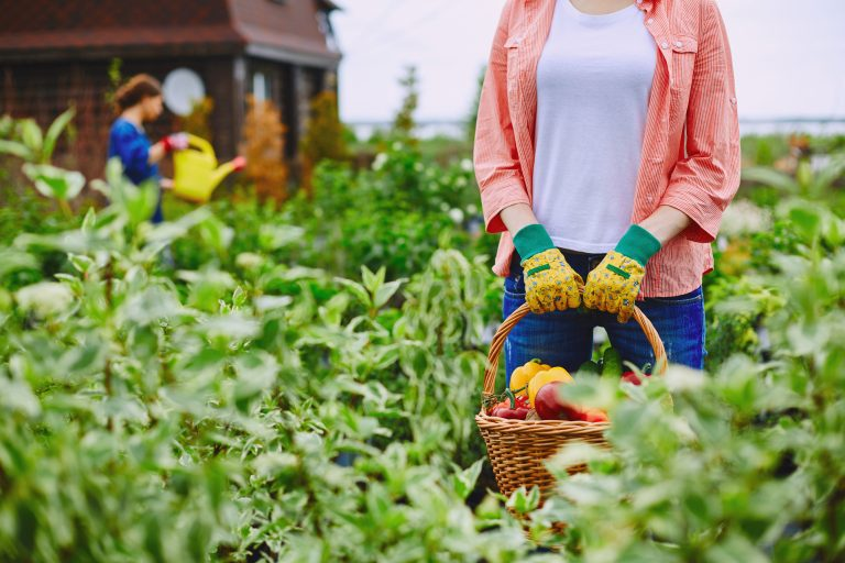 farmer harvesting natural garden e1567282151401