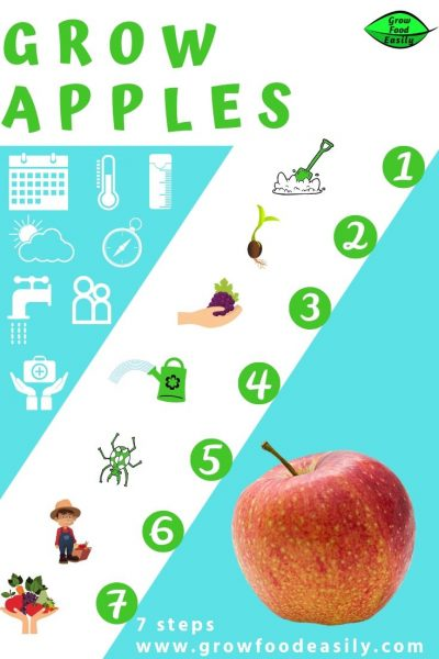 how to grow apples e1567285310359