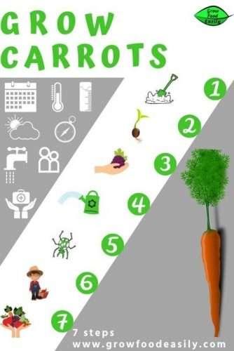 how to grow carrots e1567284065370