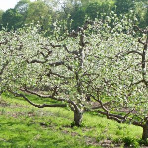 spring apple orchard e1567285447573