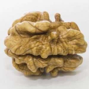walnut e1567283595524
